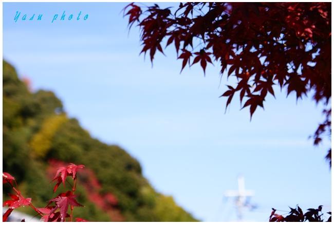 紅葉2.jpg